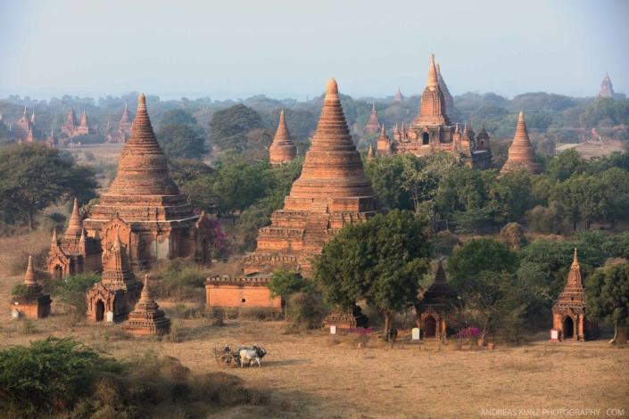 Myanmar-temples-with-bull-in-bagan