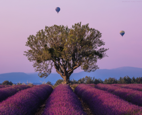 Lavender and balloons in France