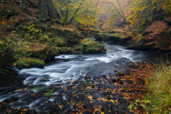 Autumn river and forrest in Germany