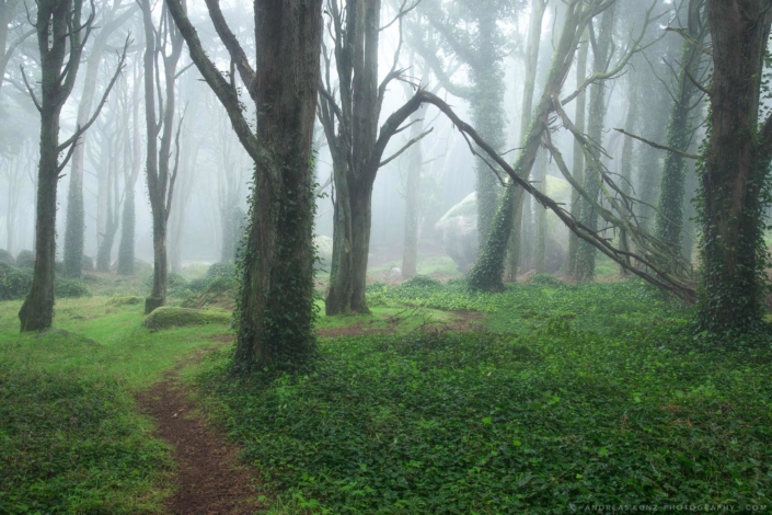 Portugal-magic-forest