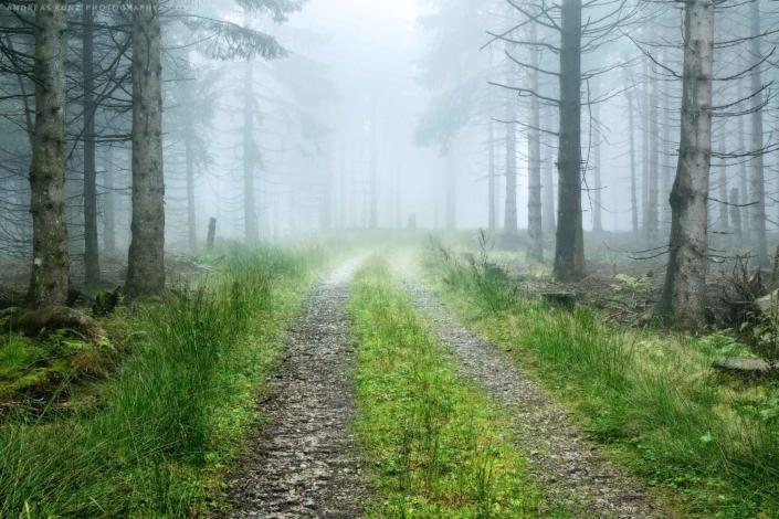 Schwarzwald-mit-Weg-und-Nebel