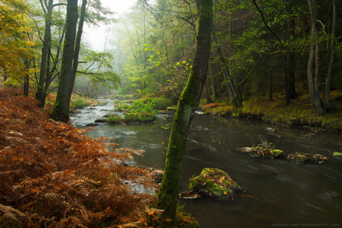 Autumn forest with farns and river in Germany