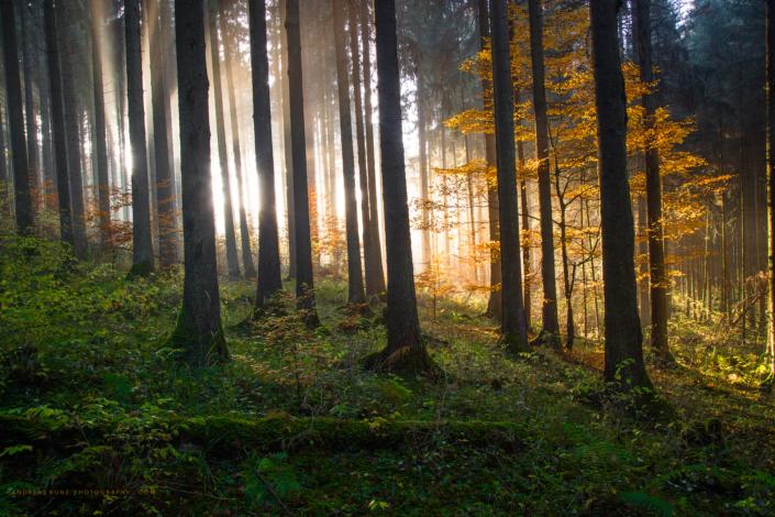 burning-tree-