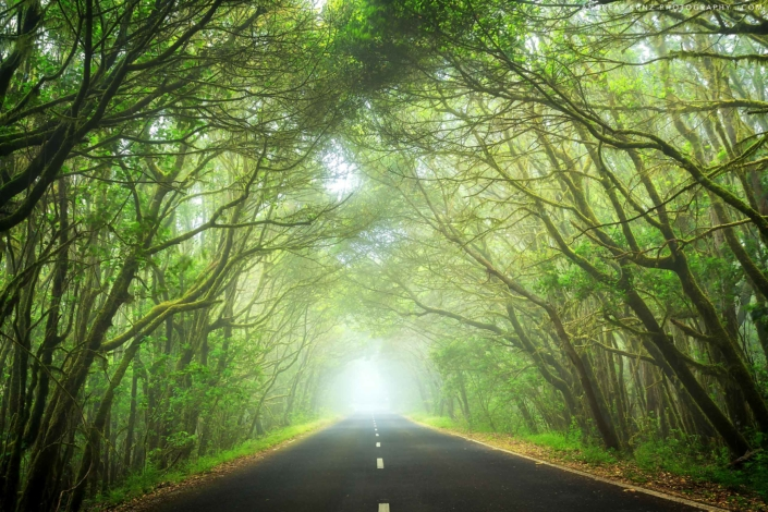 cloud-forrest-with-road-la-gomera-